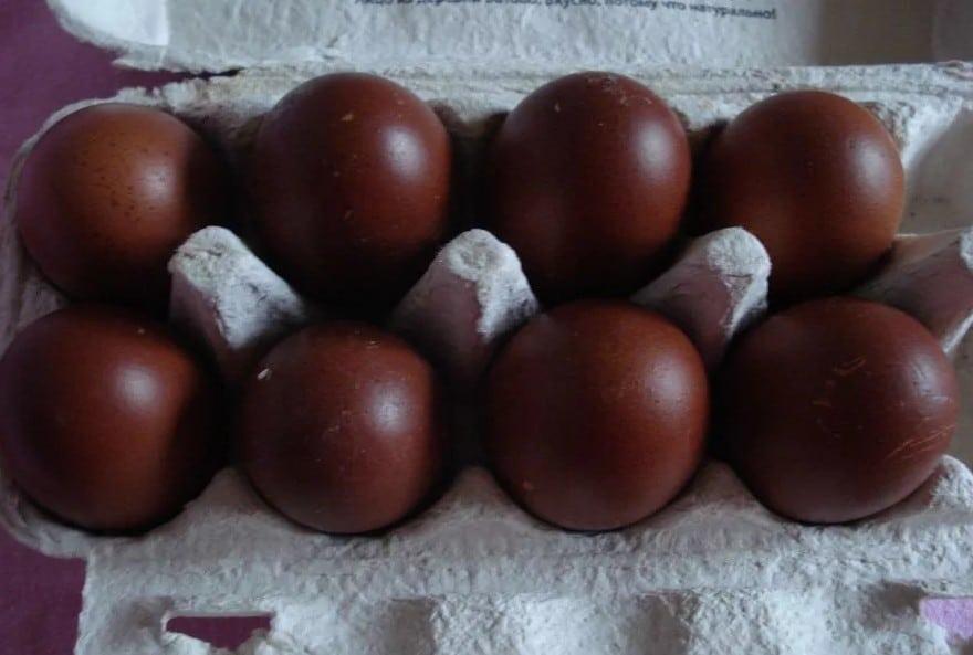 курицы которые несут шоколадные яица