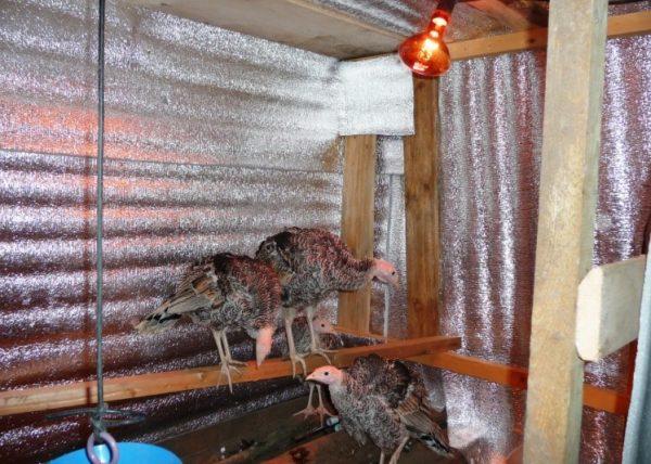 При содержании кур важно соблюдать температурный режим