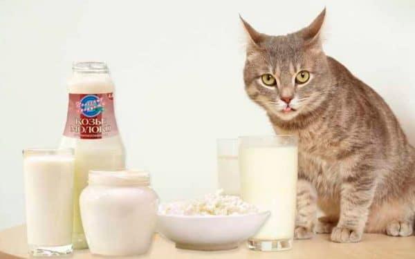 Оттенки парного молока зависят от степени жирности