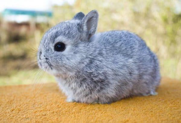 Почему худеют кролики и умирают