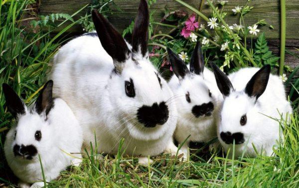 После того, как родились крольчата, осматривайте выводок ежедневно