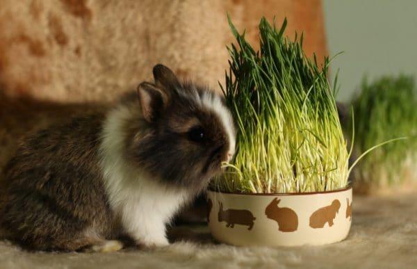 Чтобы предупредить эпидемии, нужно вакцинировать всех кролей
