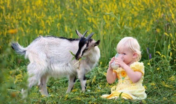 Кипячение молока помогает уничтожить вредоносные микроорганизмы, которые попадают в продукт извне