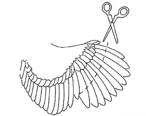 Подрезка крыльев