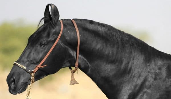 Лошадь - животное с тонкой натурой, настоящий друг и компаньон