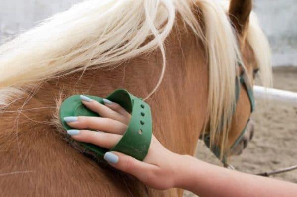 Чистку следует производить ежедневно, а также после тренировок и прогулок лошади