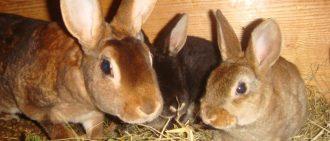 Какие заболевания опасны для кроликов?
