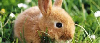 У кролика болит живот