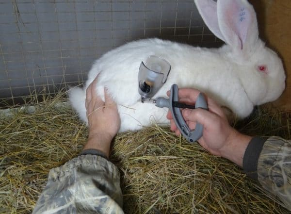 Использование антибиотиков для лечения поноса у кроликов