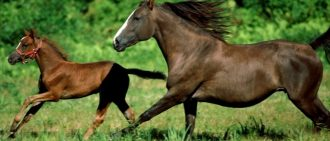 Виды седла для лошади: казачьи, строевые и спортивные, фото и видео