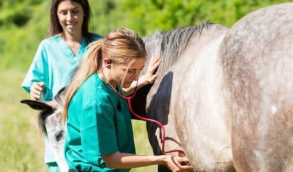 Хорошее питание и благоприятные условия помогут лошади выносить жеребенка и легко его родить