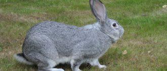 Какую можно давать траву кроликам