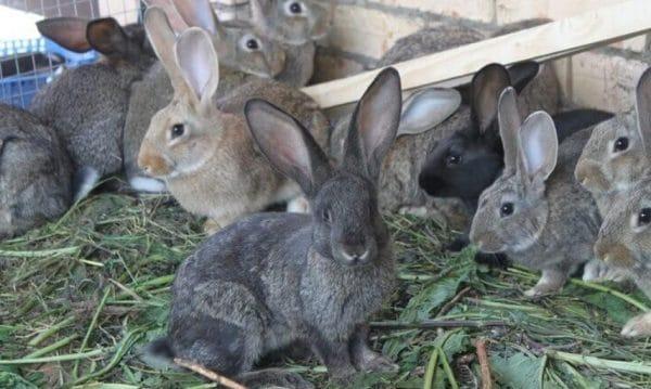 Перед планированием потомства важно следить за состоянием здоровья животных