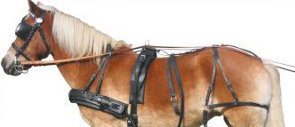 Виды уздечек для лошадей