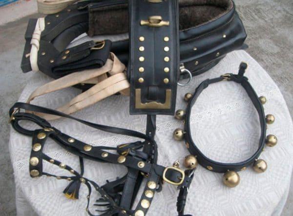 Сбруя для лошадей - совокупность особых приспособлений, предназначенных для седлания