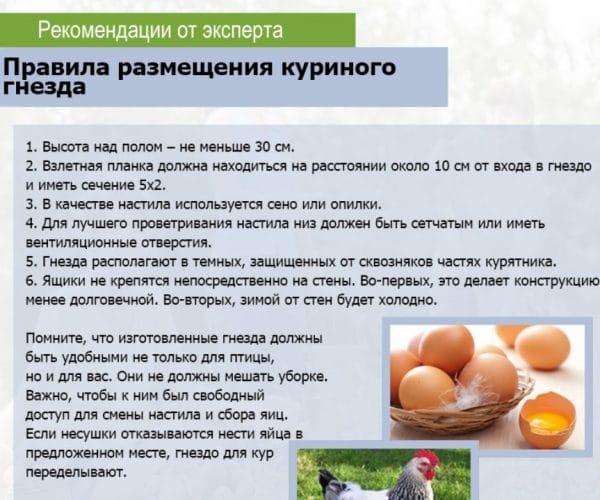 Правила размещения куриного гнезда
