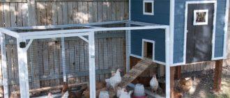 Вредные грызуны в курятнике — боремся с ними правильно