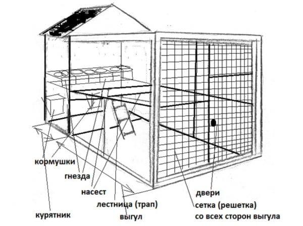 Схема и устройство курятника