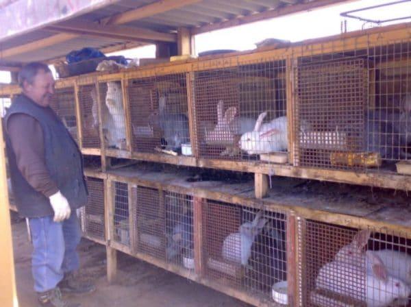 Покупка кроликов