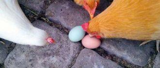 Срок годности яиц куриных, хранение по ГОСТу, где и как хранить