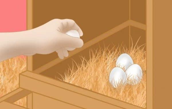 Собирайте яйца несколько раз за день