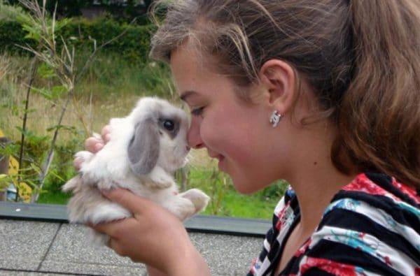 Кролика следует покупать у разводчика животных или в питомнике