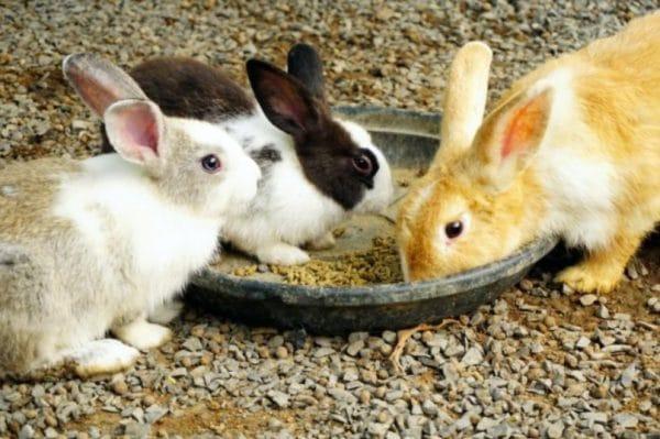 Отсадка крольчат от матери по достижении возраста полутора месяцев