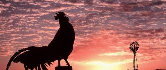Срок годности яиц куриных: Правила хранения домашних и магазиных яиц по ГОСТу в домашних условиях при комнатной температуре