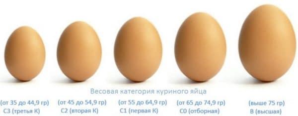 Вес яйца в граммах по категориям