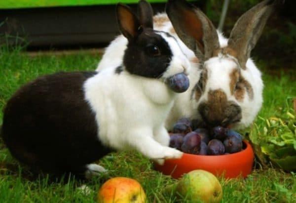 Яблоками нужно кормлить правильно, иначе возникнут проблемы