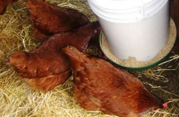 Для предпринимателей выпускается большое количество кормовых смесей для выращивания птицы