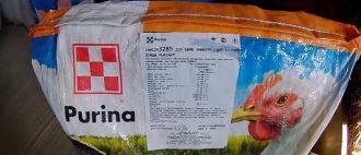 Какие давать витамины для несушек?
