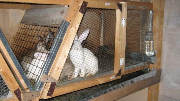 Клетки для случки кроликов