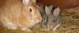 Можно ли давать кроликам газонную траву