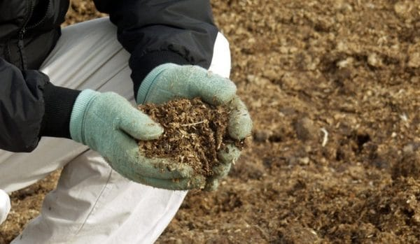 Куриный помет считается одним из лучших органических удобрений