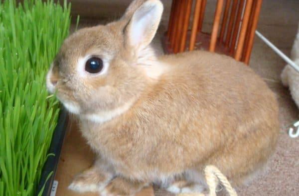 Как и все домашние питомцы, кролики требуют правильного содержания
