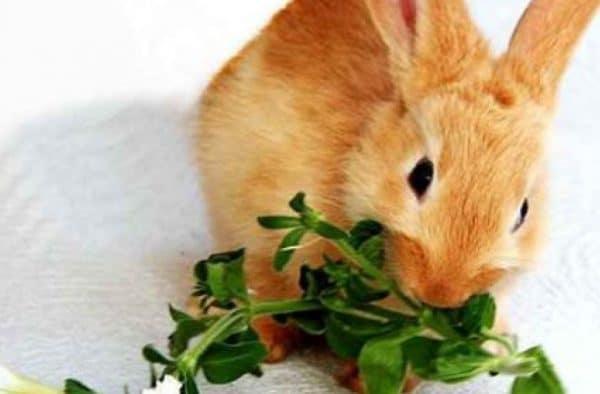 Грубые ветки ускоряют усвояемость пищи
