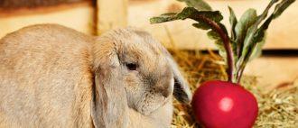 Каким зерном кормить кроликов - особенности правильного рациона