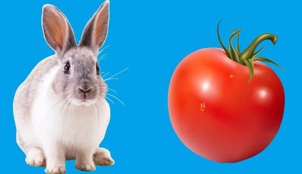 Давайте спелые помидоры, у плодоножки не должно быть зеленого пятна