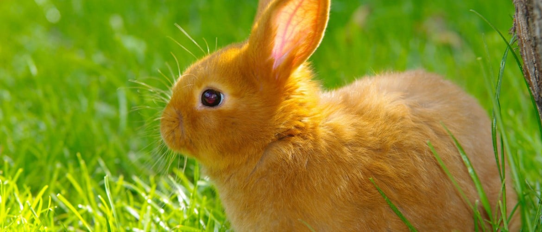 Размер ямы для кроликов