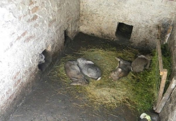 Крольчатник в яме