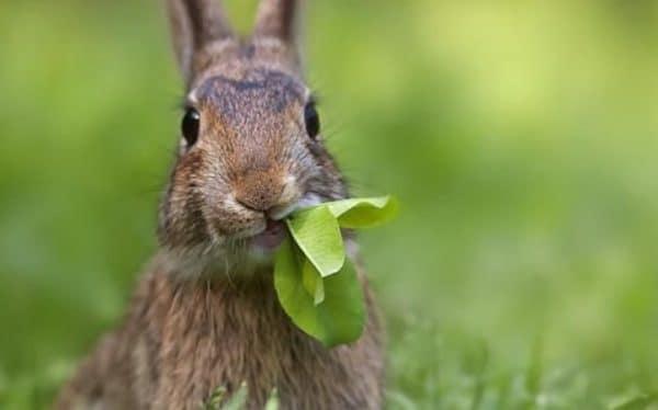 Разведение кроликов – способ заработка, не требующий больших вложений