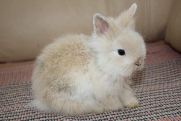 Декоративные кролики – это милые и ласковые домашние животные