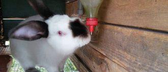 Крольчатник своими руками чертежи схема фото видео