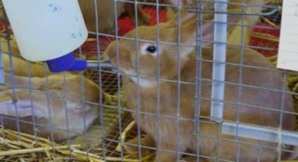 Поилки для кроликов могут иметь особенную конструкцию и строение