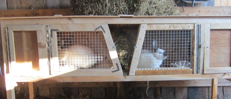Чертежи и размеры клеток для наших кроликов