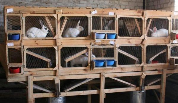 Простейшая конструкция клетки для кроликов