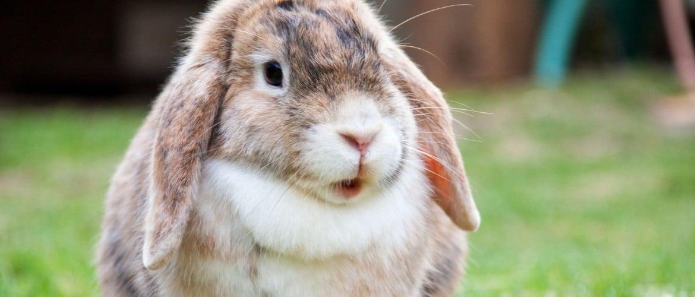 Почему болеют и дохнут кролики симптомы причины что делать