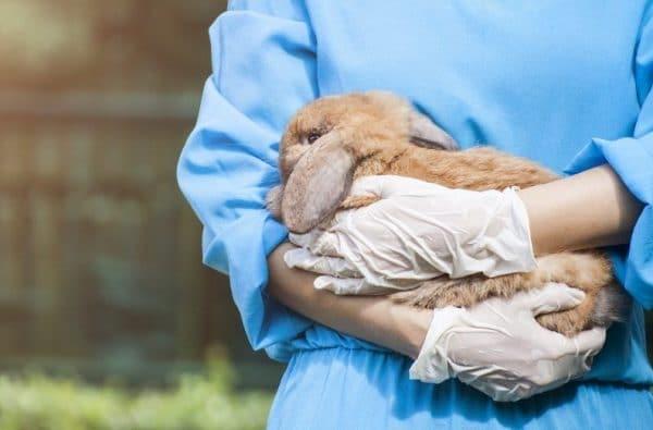 Препаратов для борьбы с вирусом не существует, лечение направлено на снятие воспаления во рту животных и предупреждение осложнений