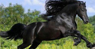 Орловская порода лошадей описание и характеристика правила содержания